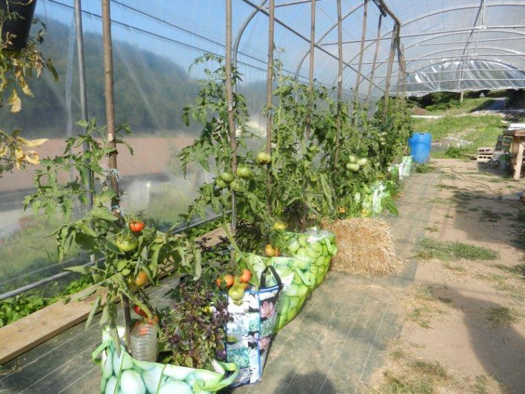 645   Tomates .....
