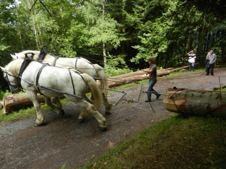 799   Débardage à cheval