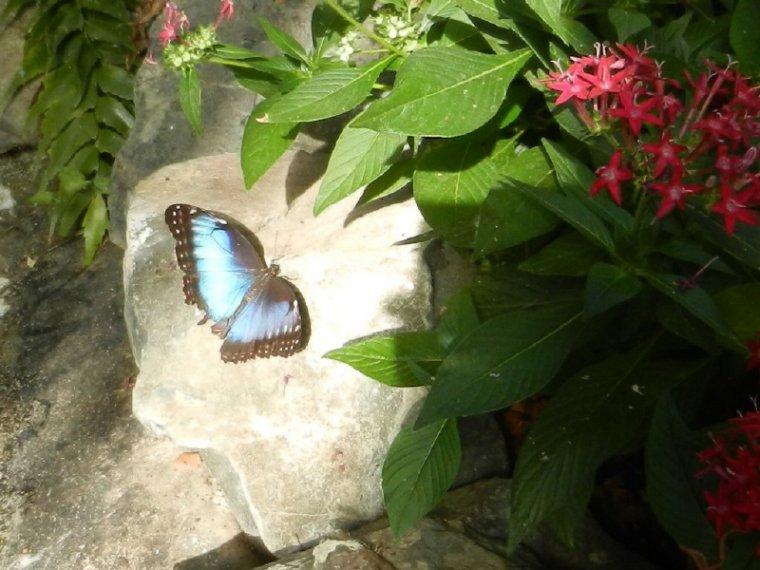 802  Papillons exotiques