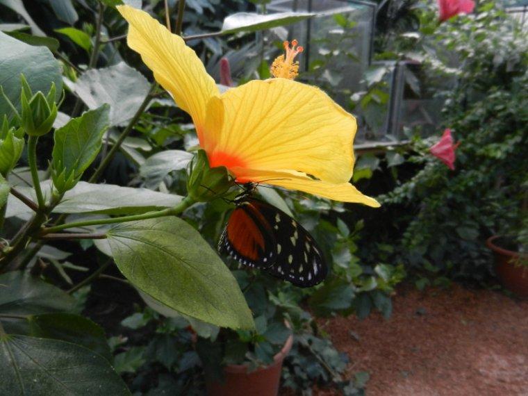 804   Papillons et fleurs exotiques