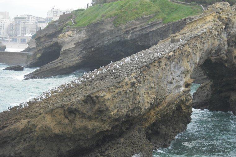 830  Biarritz  (1/2)