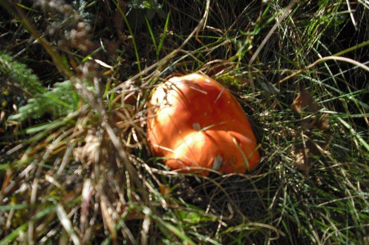 837    Images d'automne...