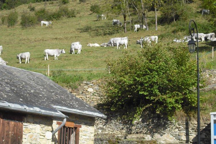 839   Flânerie au village....