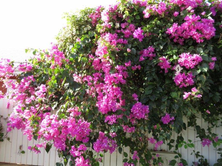 871  Fleurs et paysage