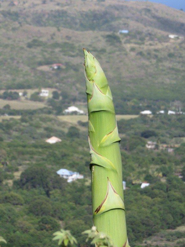 873 blog de alpeflor for Plante yucca chat