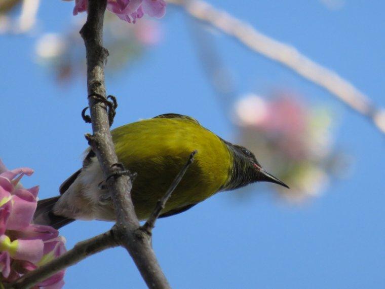 876   L'arbre aux colibris