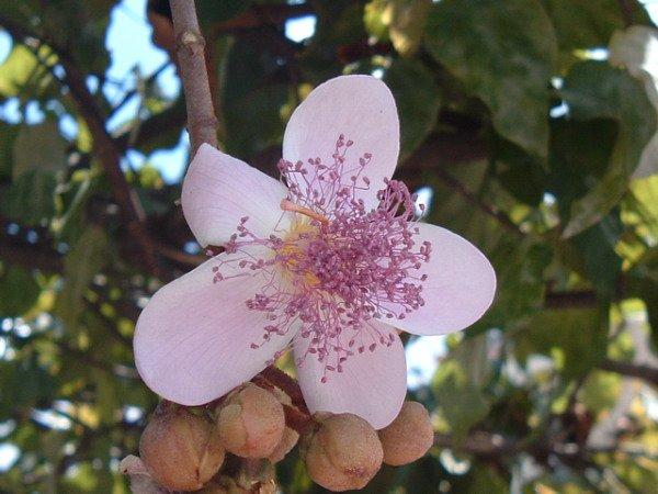 """887   Plantes et fleurs """"utiles"""""""