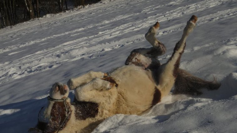 897   Dans la neige
