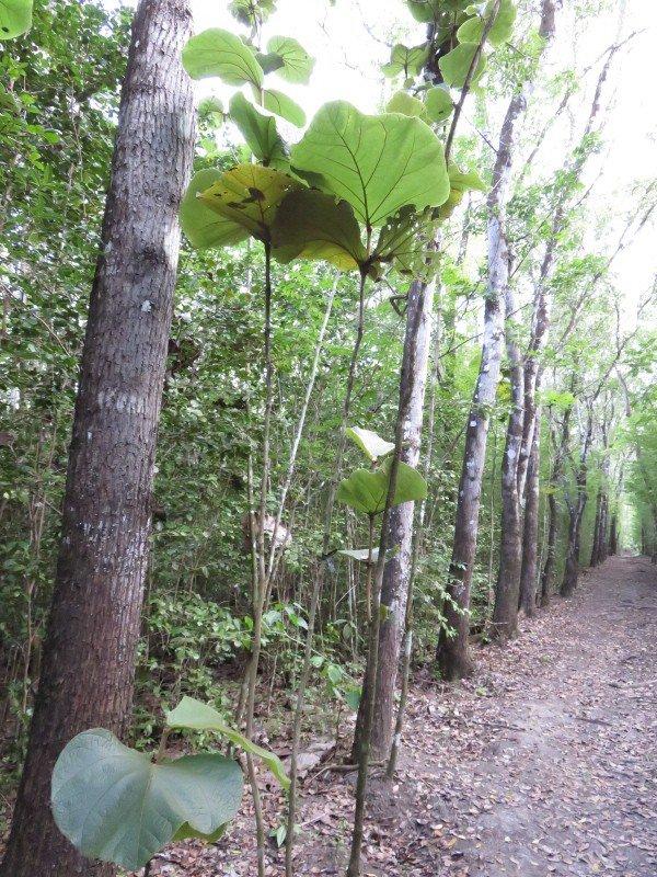 914   Promenons-nous dans les bois.....