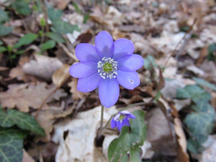 923 La Drôme, fleurs