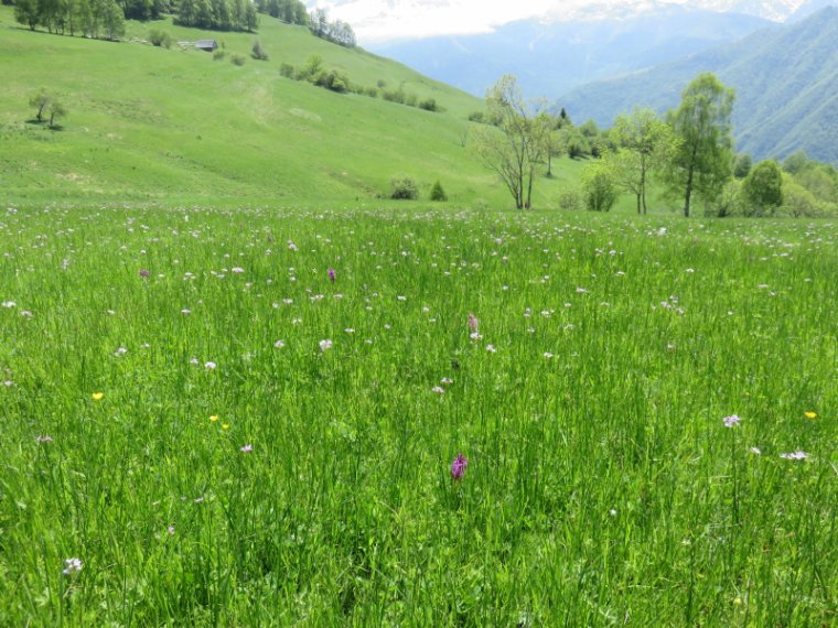 945  Fleurs des champs