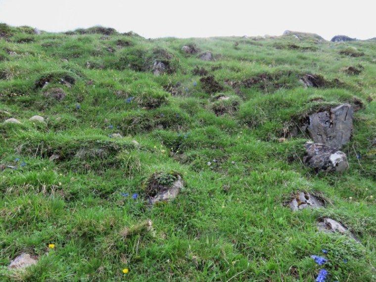 959   Randonnée au Campsaure  ( 3 )