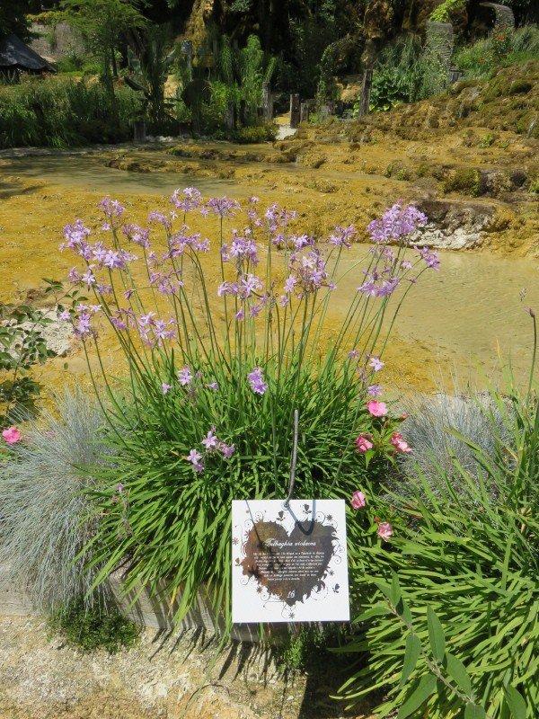 990  Jardin des Fontaines Pétrifiantes. La Sône