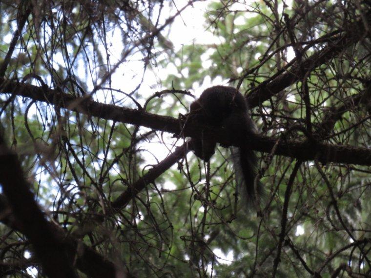 1000   L'écureuil