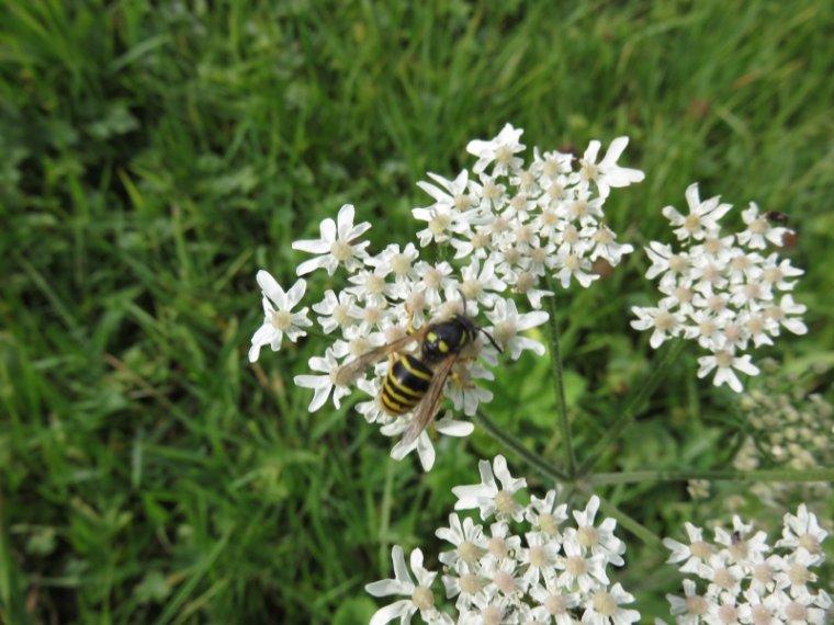 1001   Fleurs d'été et insectes