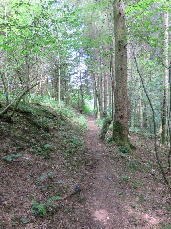 1039  Forêt et campagne vosgiennes...