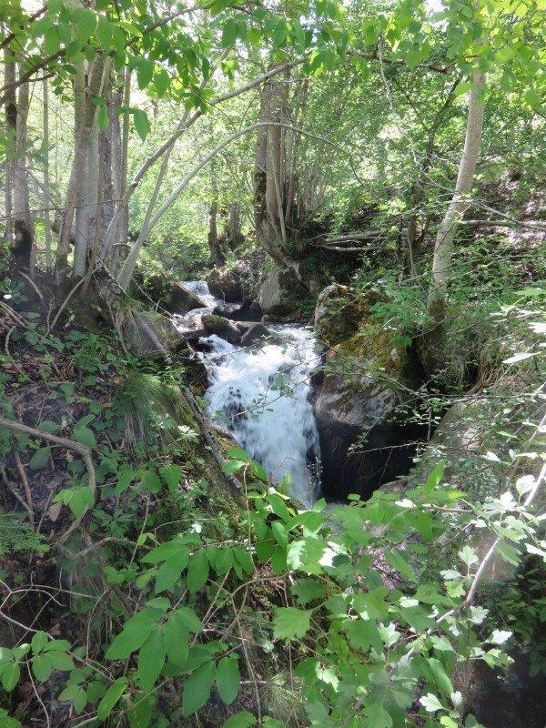 1089  Petit tour en forêt...