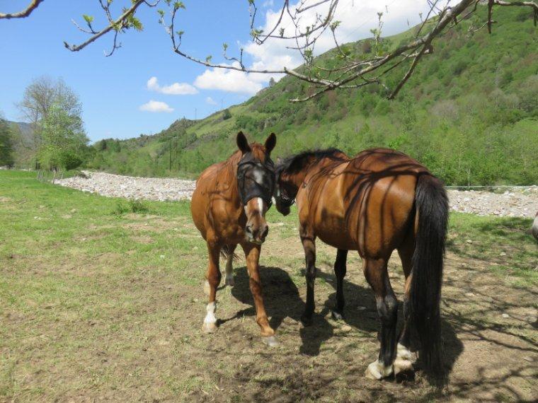 1091....chevaux et...autres...