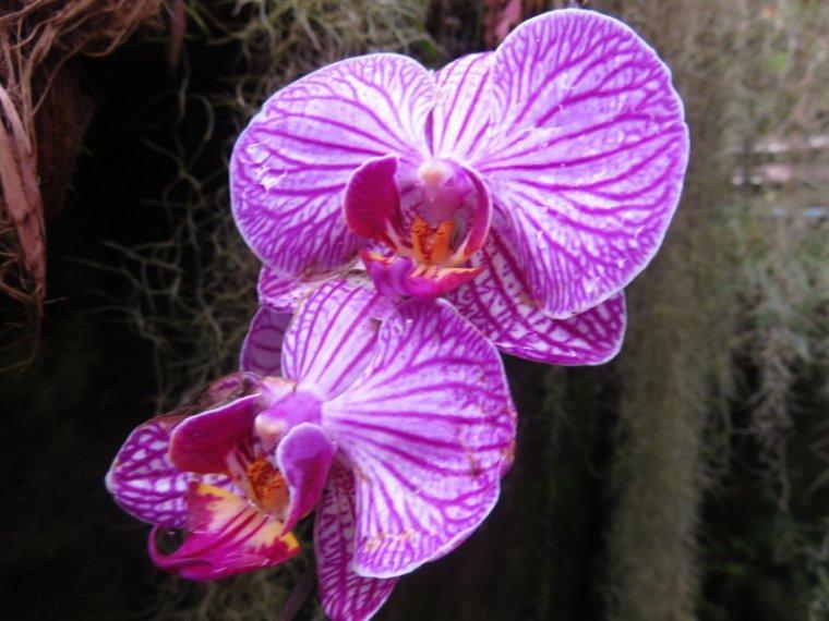 1234   Orchidées...