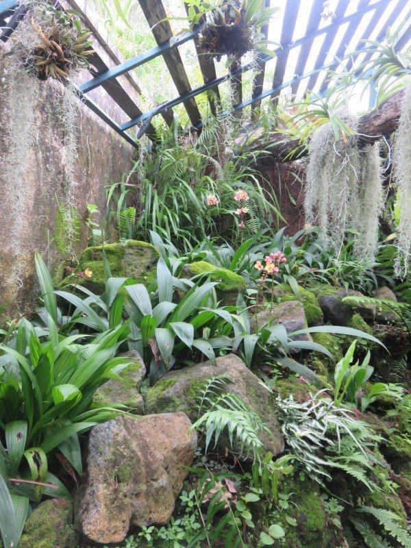 1235  Orchidées...suite