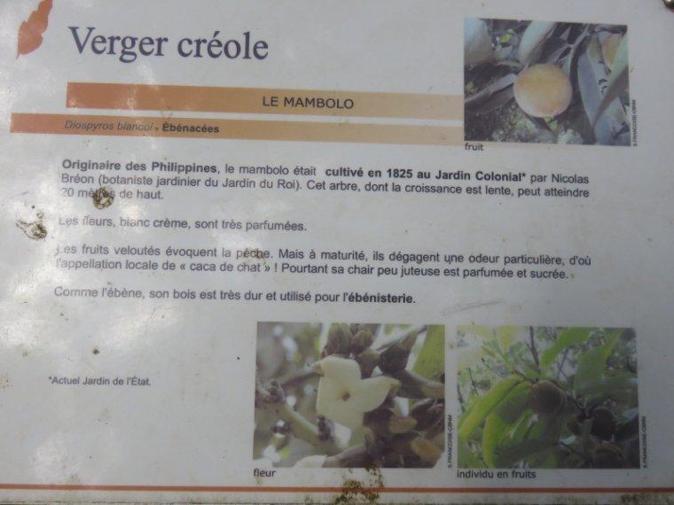 1237  Le jardin Mascarin (suite)