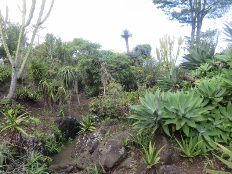 1238   Le jardin Mascarin (suite)