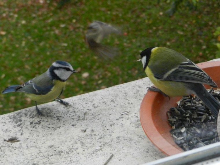 1253  Oiseaux du jardin