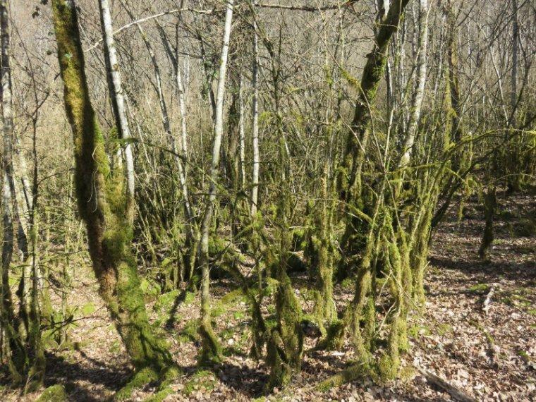1262 Forêt magique