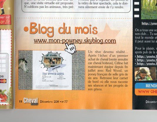 Blog du mois cheval junior !