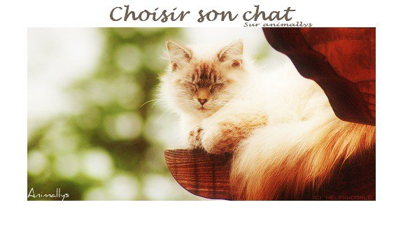 Choisir son chat