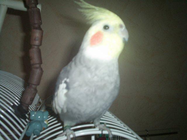 Mon Coco
