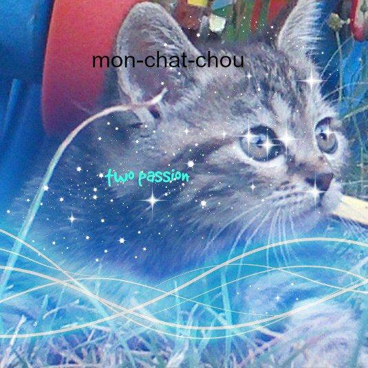 mon-chat-chou