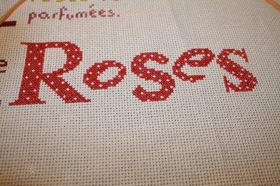 Etape 7 SAL LLp rose