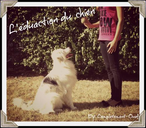 L'éducation du chiot/chien : - Complètement-Ouaf
