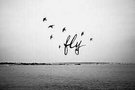 Fly away with me.