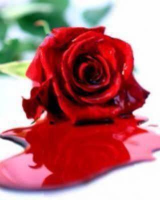 rose rouge a seng
