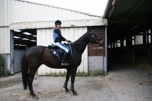 Recherche cheval : explications