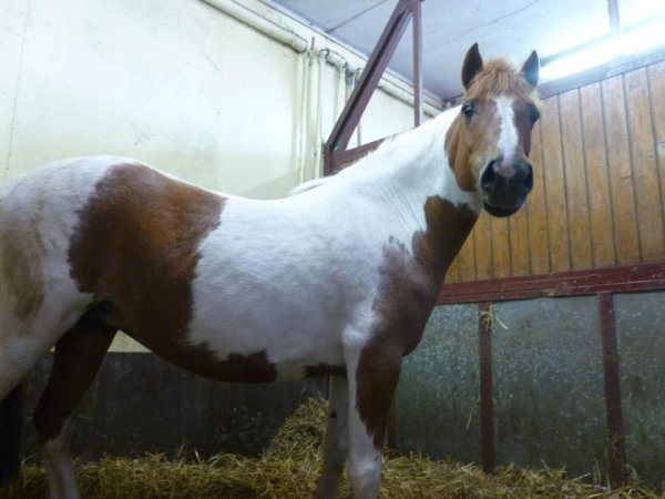 centre equestre 3d