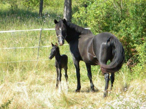 Perle Black (parfois appelée Apache )