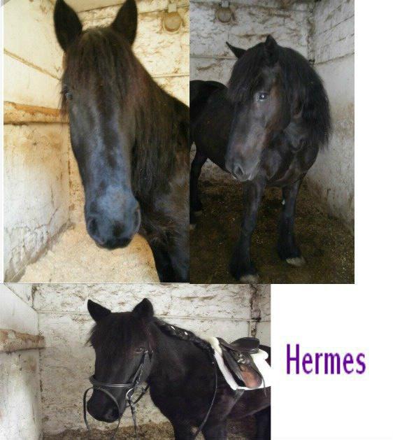 Igloo du Pouech renommé ''Hermès''.