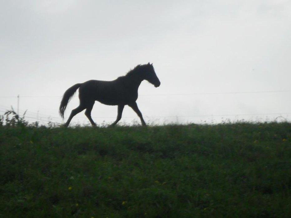 Recherche cheval