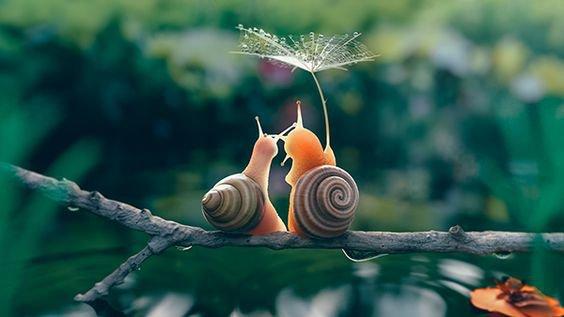 deux escargots qui s'aime