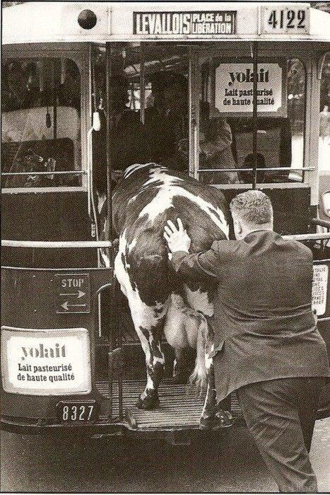 Oh la vache ! - Opus