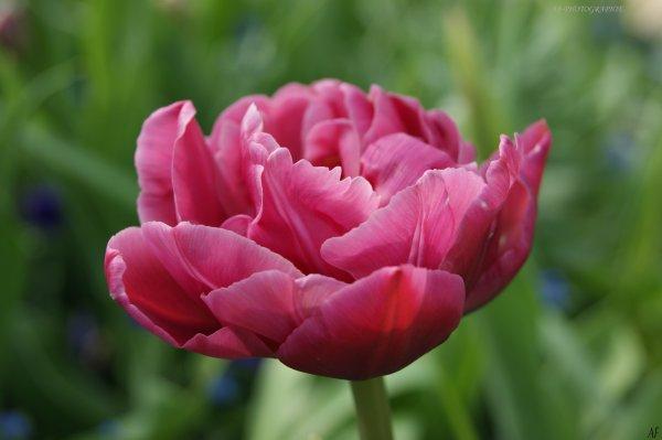 Macrographie florale,