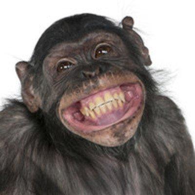 Les animaux qui rient.