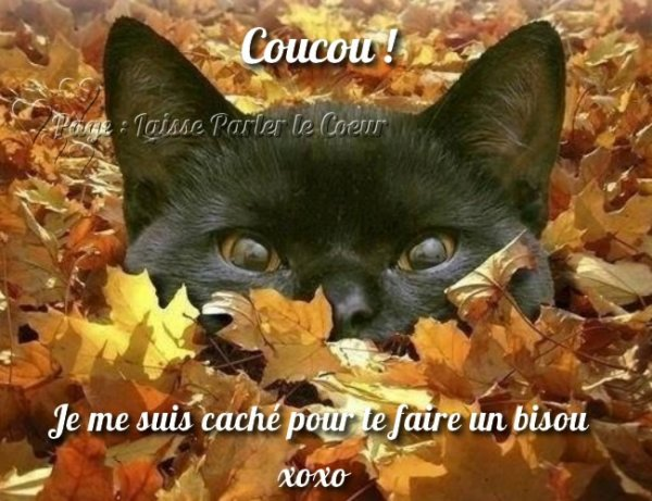 @@@@@+++++++++ BISOUS