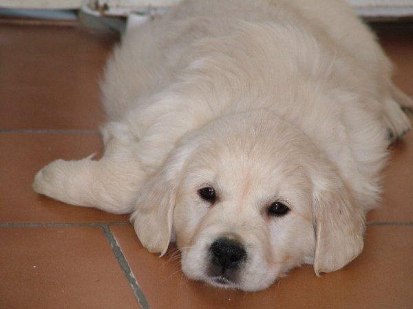 Mon chien Hamy :)♥