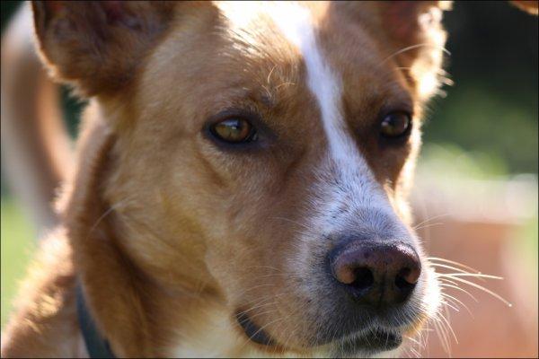 """""""Les chiens ne mentent jamais quand ils parlent d'amour"""""""