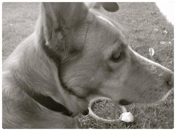 """"""" Le chien n'a qu'un but dans la vie: offrir son coeur """""""