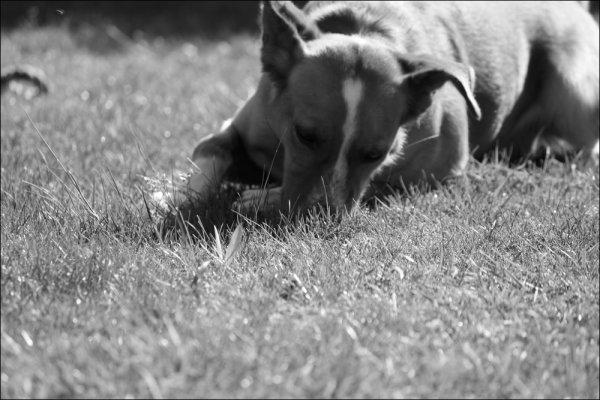 """"""" Le chien a toutes les qualités intérieures qui peuvent lui attirer les regards de l'homme """""""